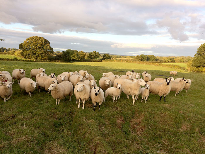 Tale Valley Farming Partnership – Clyst St Lawrence, Cullompton, UK
