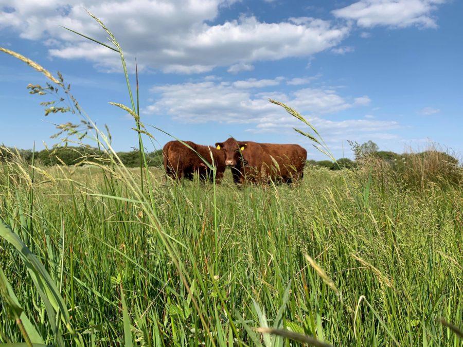 What Price British Farming?