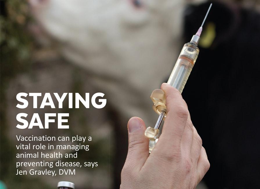 Staying Safe Blog