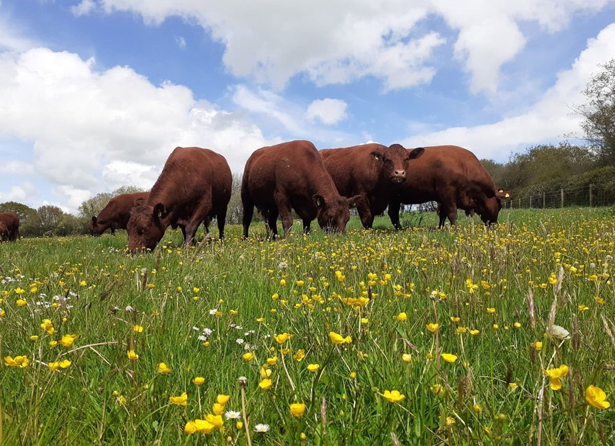 Stand Up For British Farming Blog
